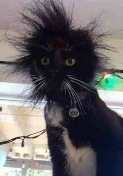 Có lẽ đây là mèo Einstein trong chuyện con mèo dạy hải âu bay